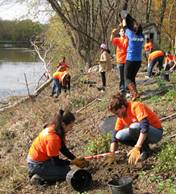 volunteers planting trees and shrubs along a stream