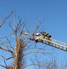 Weedsport Fire Department working to free trapped hawk - image 2